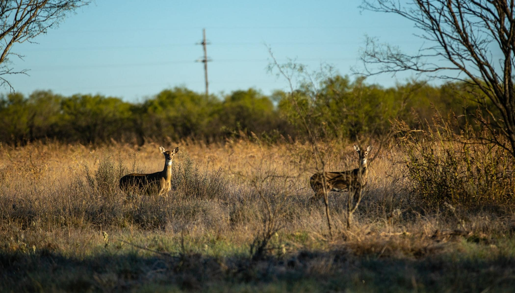 two deer standing in grassy field at triple draw ranch