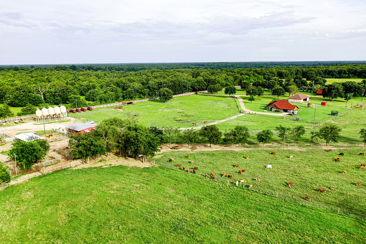 aerial view of cattle herds and main buildings at sulphur river ranch