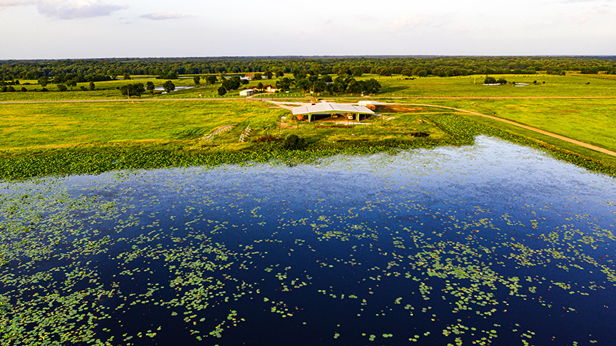 calm lake surrounded by green pasture and covered pavilion at sulphur river ranch