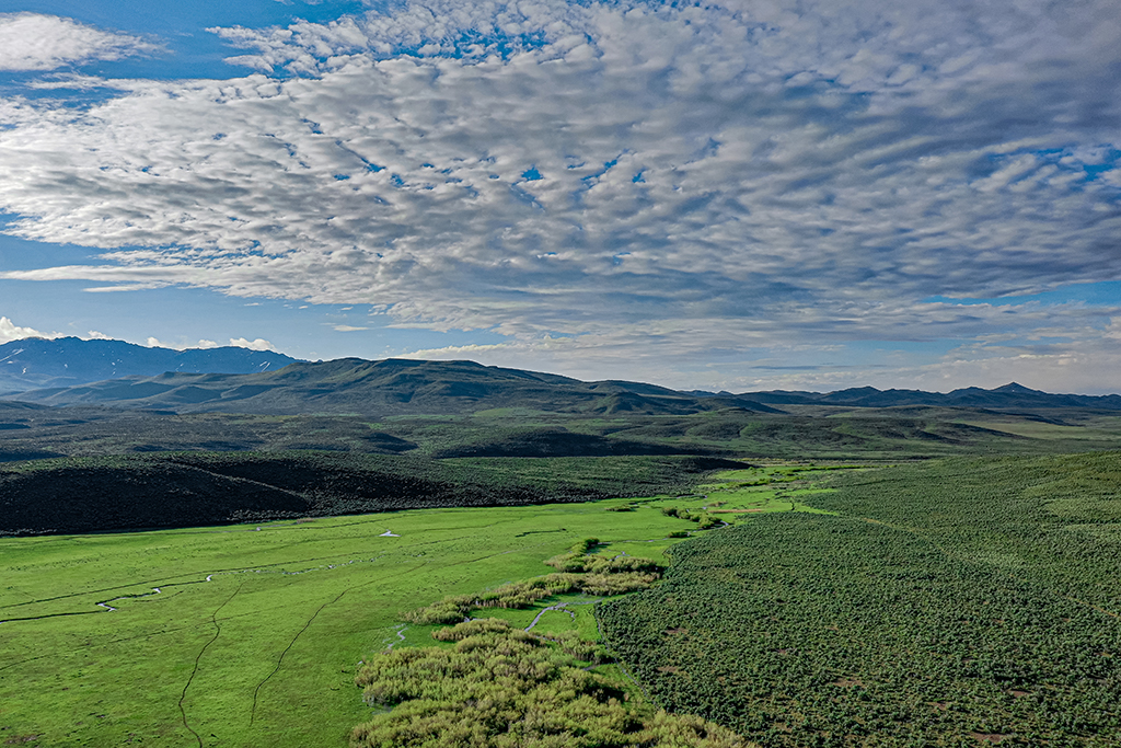 hunting blind in grassy knoll at clear lake flats ranch