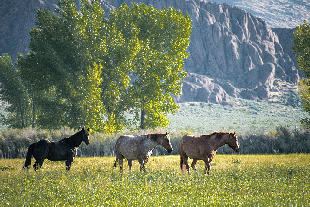 green forests and pastures at clear lake flats ranch